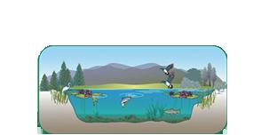 Organic Sediment Removal Systems, LLC